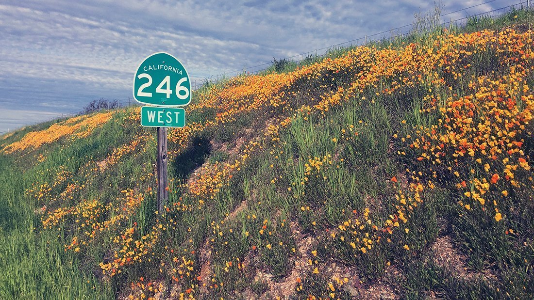 Route 246 sign with wild flowers on a hill.