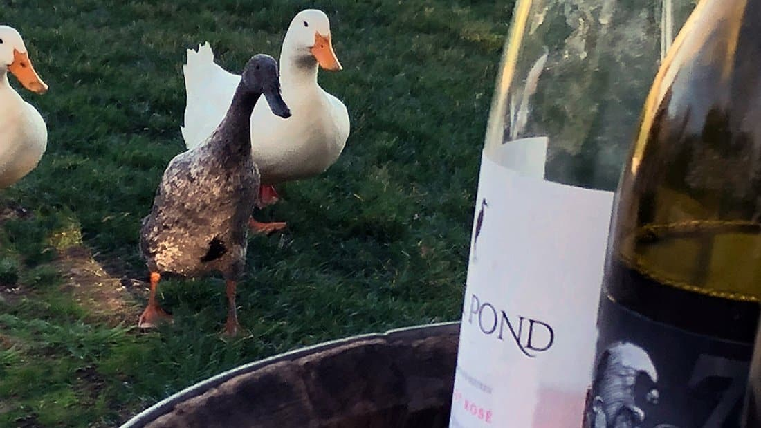 Ducks Love Great Wine