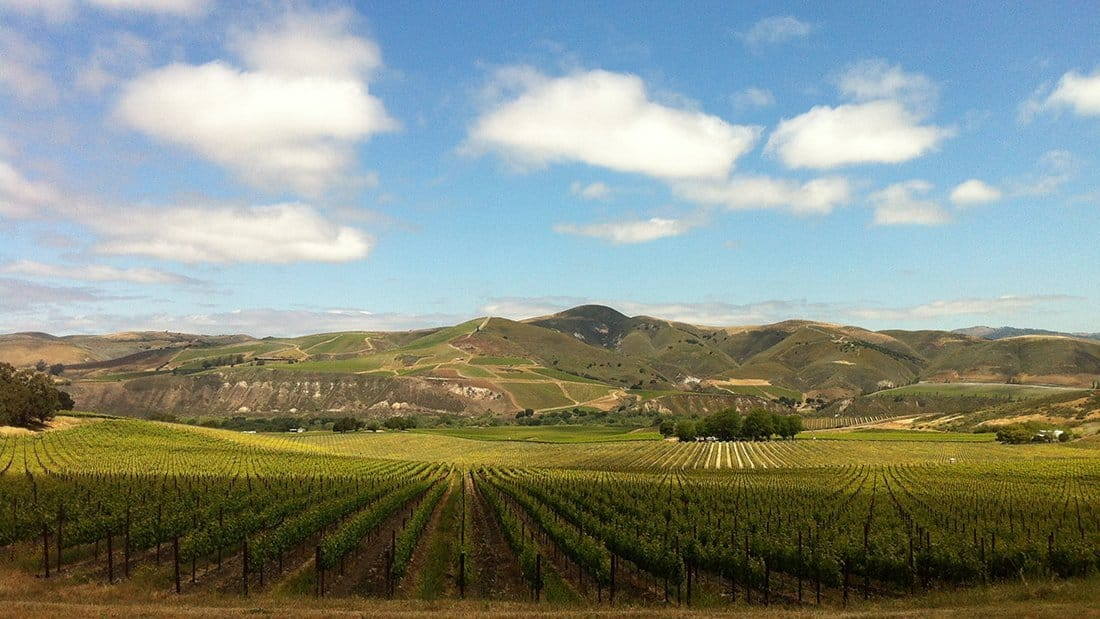 This lovely view is from above the Sanford and Benedict vineyard overlooking the Sta. Rita Hills.