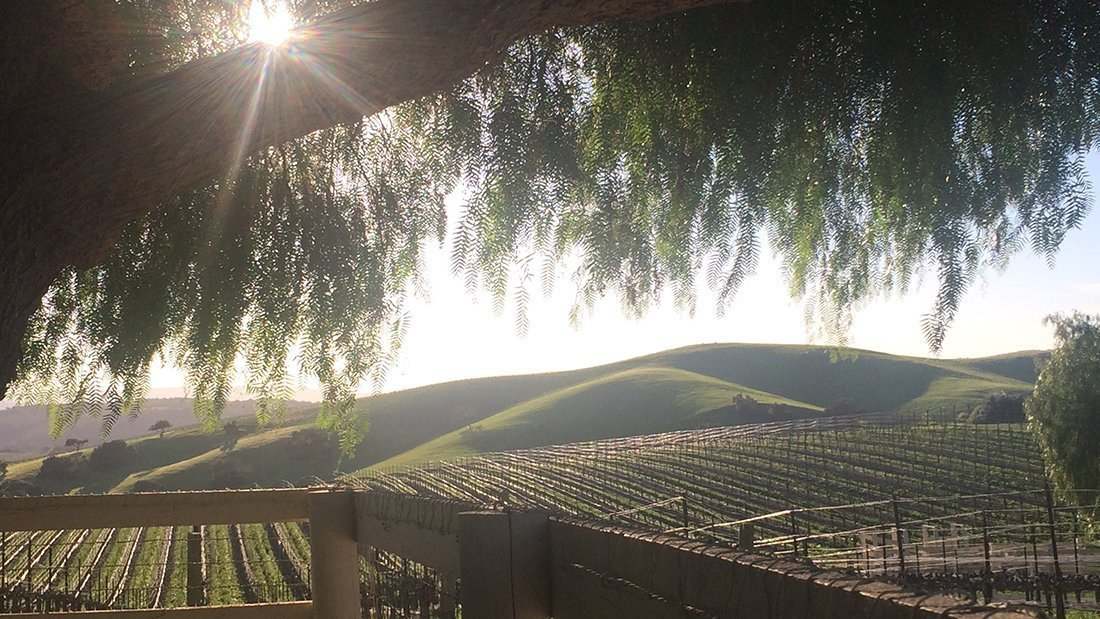 Under the shade of a pepper tree overlooking the vineyards.
