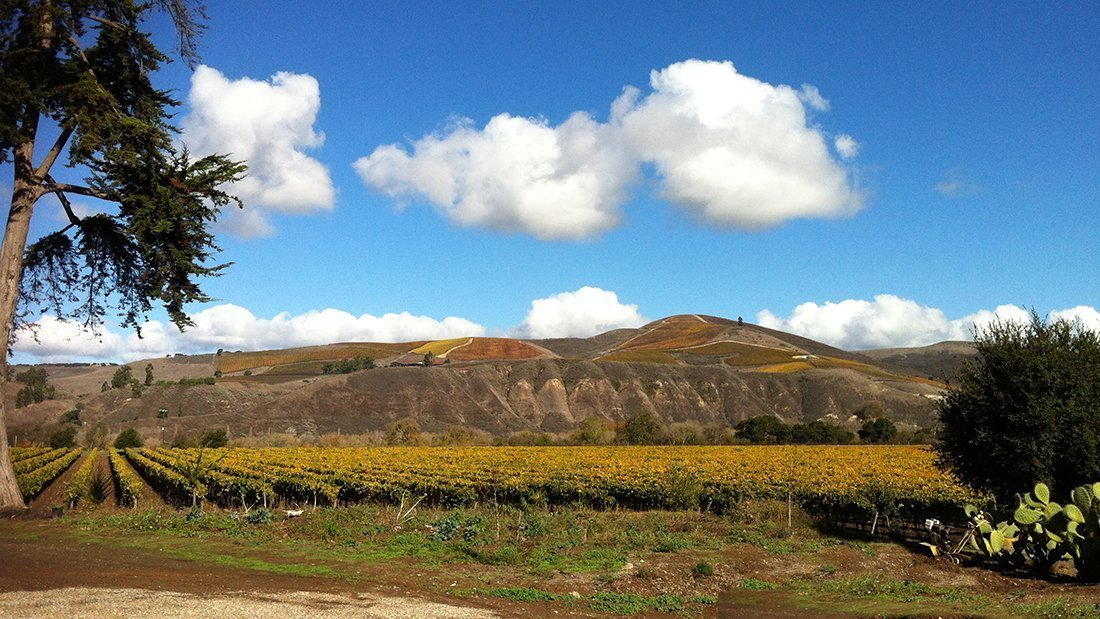 A beautiful day in the vineyards of the Sta. Rita Hills.