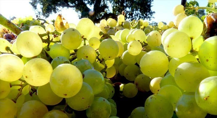 Santa Barbara County Wine Harvest 2018