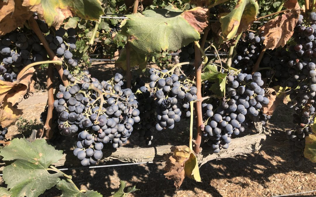 Santa Barbara Wine Tours During Harvest